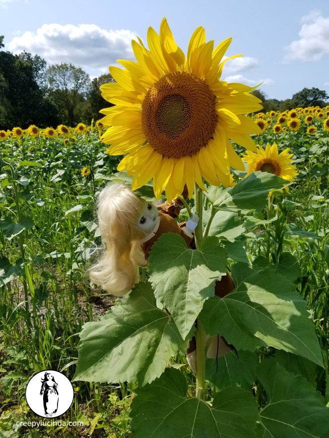 NJ_sunflower_climbing_LG