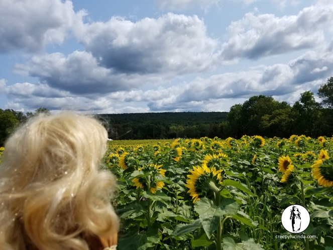 NJ_Sunflower_outlook_LG